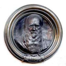 Memorial to Charles Darwin, Westminster Abbey.