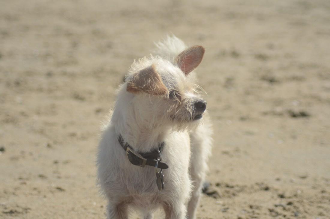 dog friendly Newport Beach