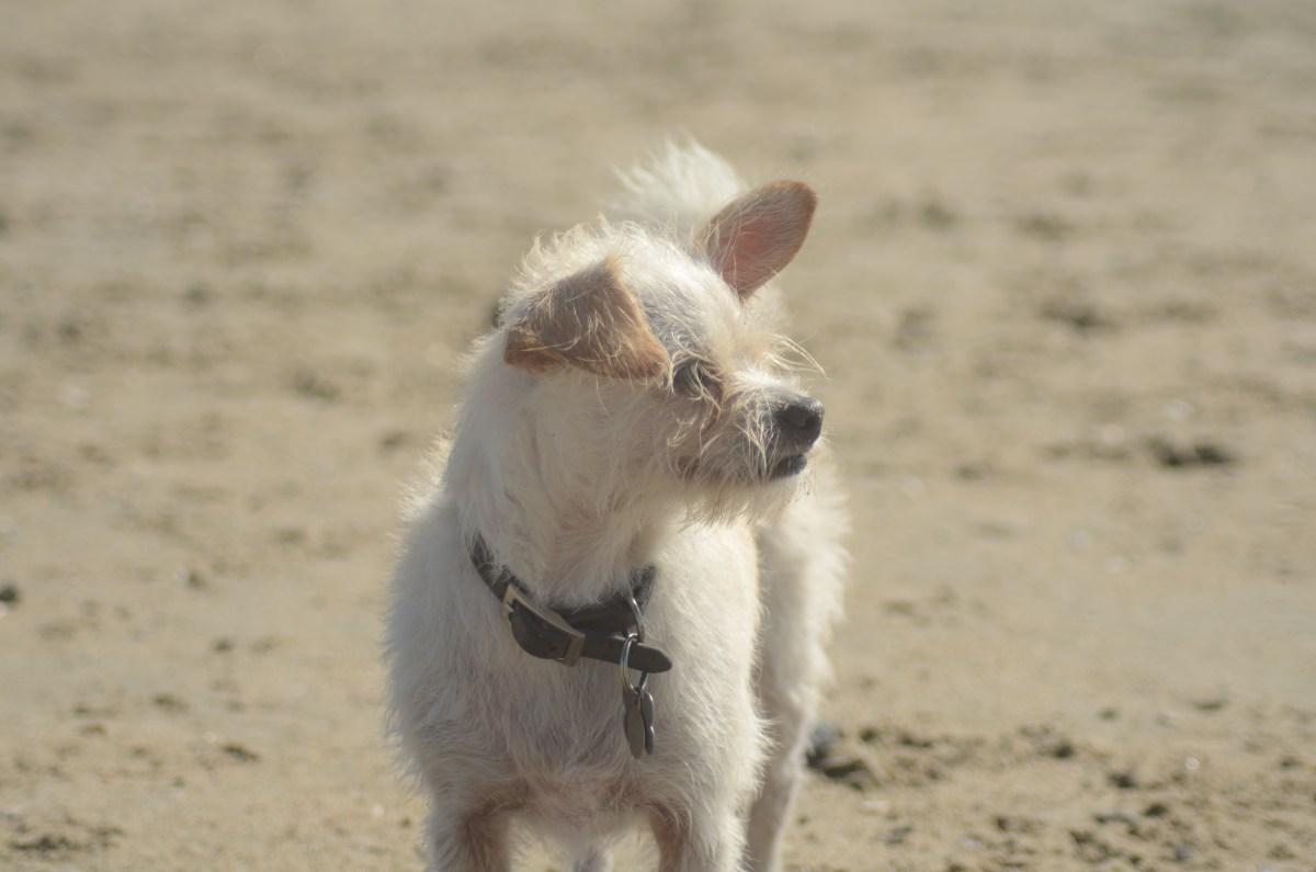 Four Dog Friendly Newport Beach Spots