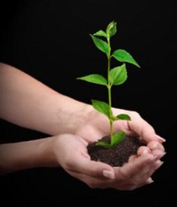Bild: en späd planta i ett par kupade händer
