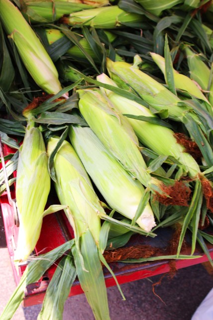 ears of corn on red truck bed