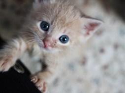 kitten room f