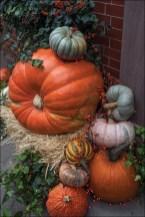 Halloween Gourds and Pumpkins