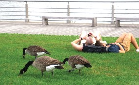 Geese Upon the Grass, Alas
