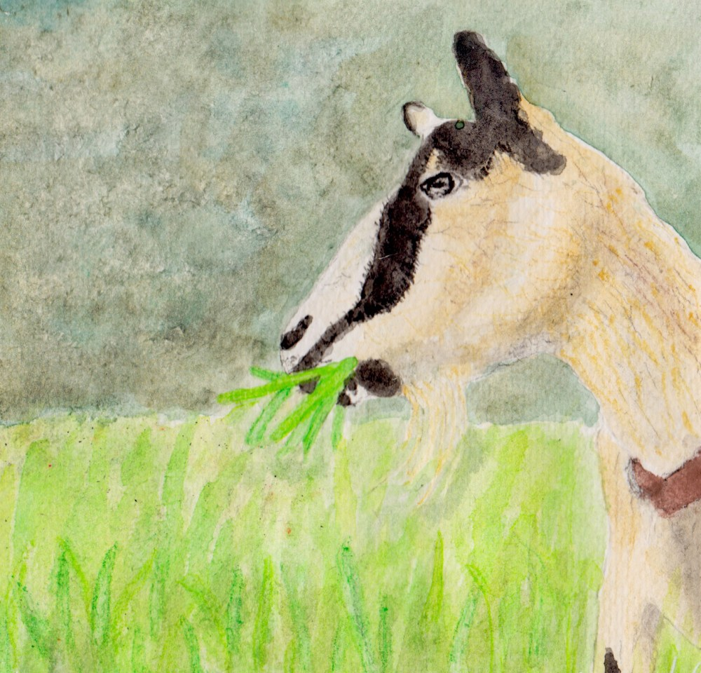 Watercolor of the Edgewood Goat