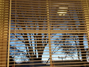 #74   Inside Looking Out