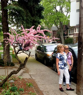 Jan and Heather en route to High Park - and a lovely crab apple tree