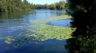 lagoon-side, we settle in to enjoy lunch and waterlilies