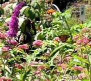 colourful flower garden: Franklin's kids' area