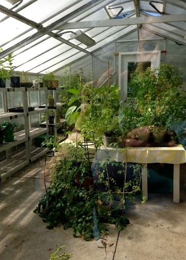 Trinity-Bellwoods has a tiny greenhouse... and we had a peek inside!