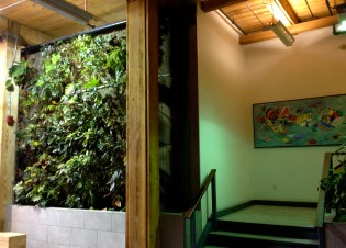 Part of Robertson Building's lobby green wall - with lovely hallway painting.