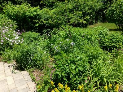 Beautiful perennial garden at The Shaw House