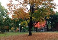 Beautiful Dufferin Grove Park, in the pink of fall! One of us would have ended our walk, seeing this lovely view, but, since the rest of us didn't, here it is.