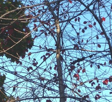 These red leaves barely clinging to the tall tree. The next breeze probably knocked them down.