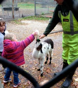 """A great zoo staffer helps kids (not little goats!! :-)) bottle-feed the 3-week-old llama baby (called a """"cria"""" - meaning baby, in Spanish). He was a cutie. Yes, that is llama milk."""