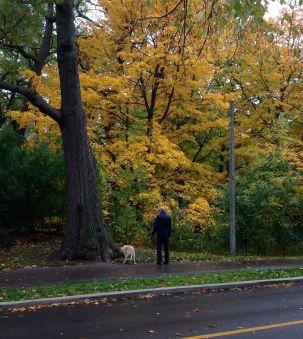 We loved this yellow tree. Nice dog, too.