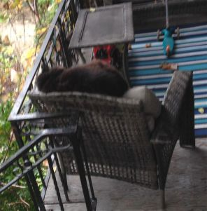 Our beautiful fluffy feline neighbour, Cleo, naps on her porch chair, just a few sunny days ago.