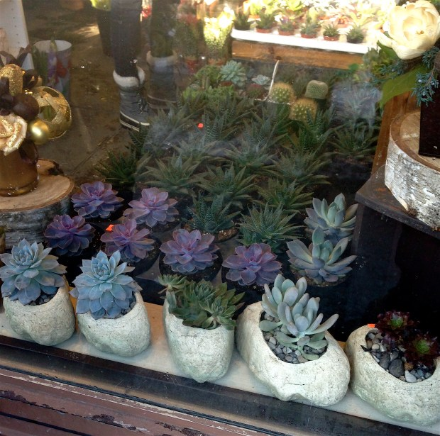 The florists' window revealed sweet little succulents. I bet a bunch of lucky folks will receive these as Christmas gifts! Lovely.