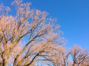There's a beautiful winter colour to these branches, against the sky.