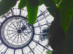 light through the leaves in the Palm House