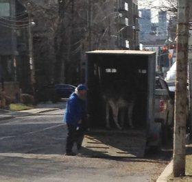 We spy a Palm Sunday donkey at Taddle Creek Park.
