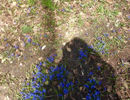 Pretty scylla in my shadow, on Elgin Street