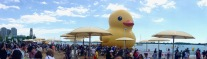 Panorama of the pandemonium over the world's largest rubber ducky, in TO at hTo beach! Little ducky to the left, under brollies).