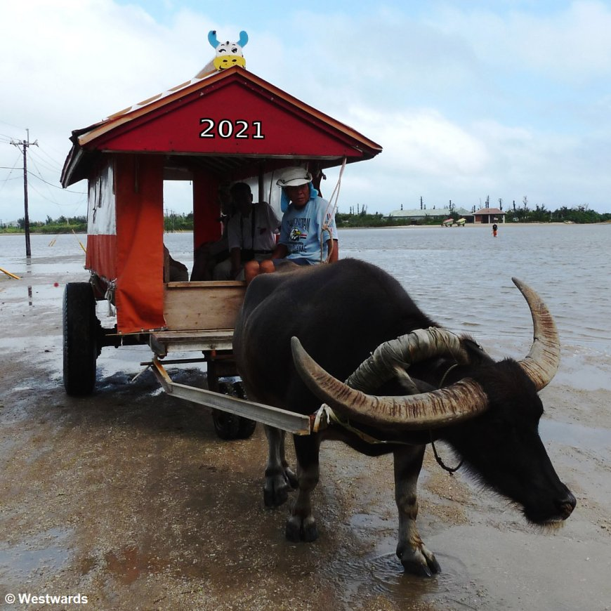 Ox cart with 2021 sign