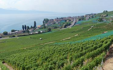 view over Lac Leman, from walking in the vineyards of Lavaux
