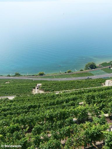 view over Lac Leman from the vineyards of Lavaux