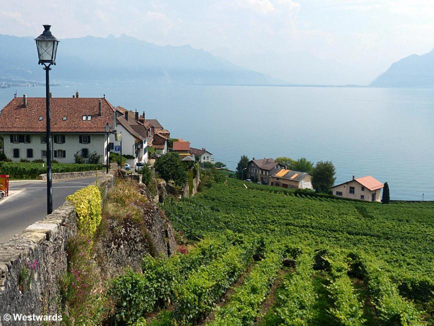 view over Lac Leman, walking the vineyards of Lavaux