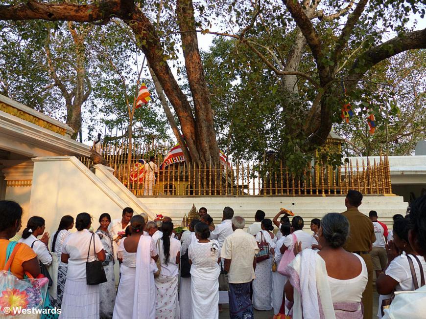 20160127 Anuradhapura Sri Maha Bodhi Pilger P1230735