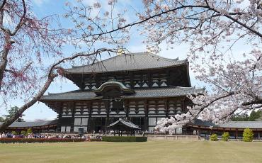 View on Todaiji Tempel with cherry blossoms