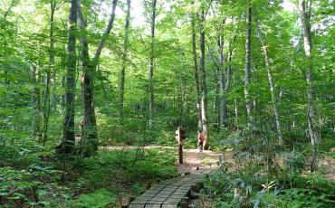 Woman hiking on a prepared trail through the forest