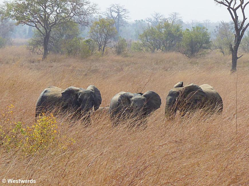 20180211 Pendjari NP Elefanten P1510070