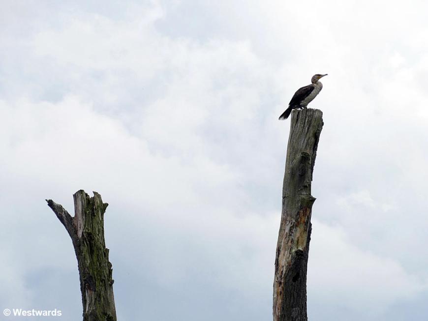 Water bird sitting on a stump