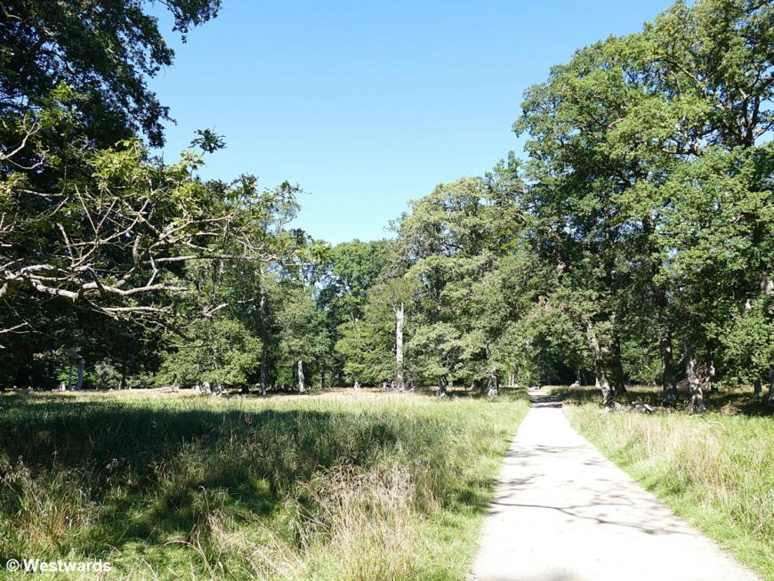 Trees and path in Jaegersborg Dyrehave