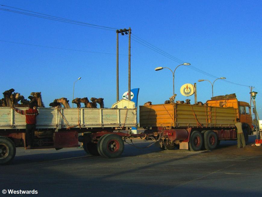 20070404 Fahrt Benghazi-Al Khoms Tanke Kamele1