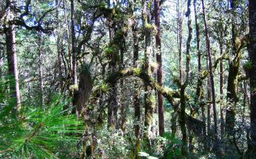 Trail through the cloud forest in the Sierra Norte