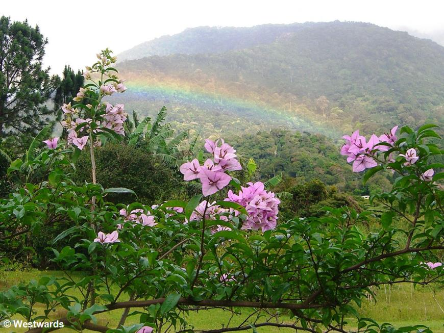 rainbow over flowers and a mountain