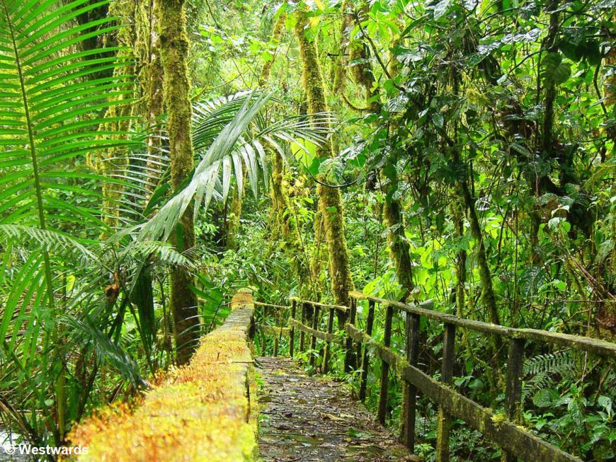 green jungle in the Parque International La Amistad