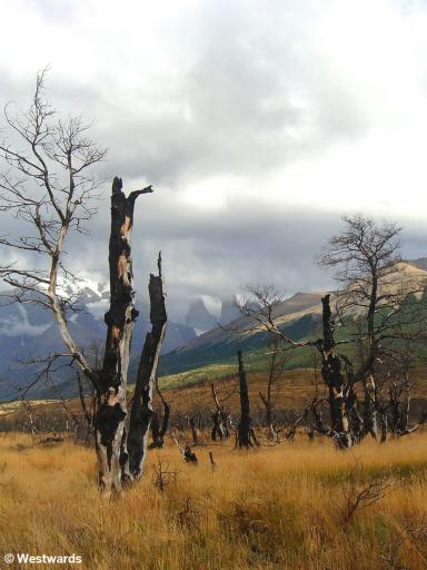 Burnt trees near Laguna Amarga