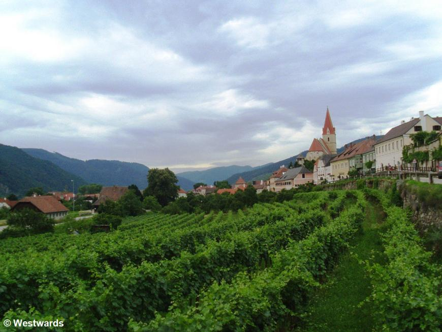 vineyards & village on the Danube cycling trail