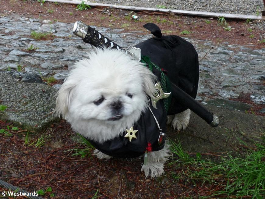 20090517 Arashiyama  Ninja Dog 1080405