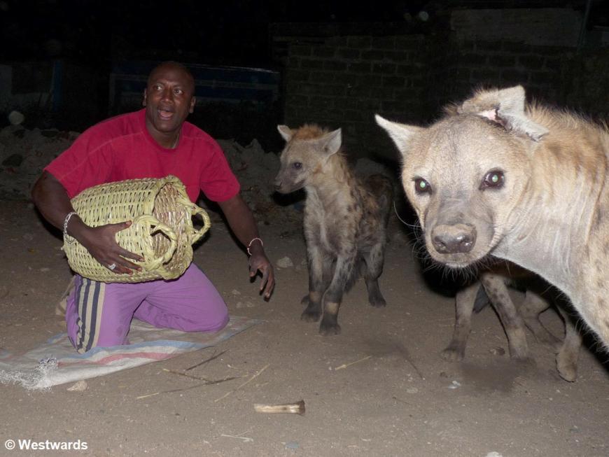 Man feeding hyenas at night