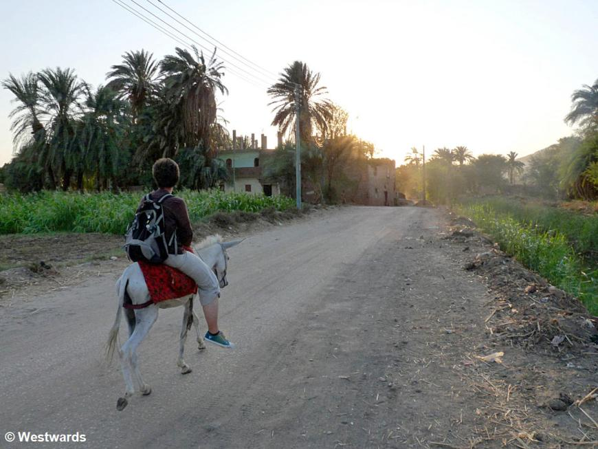 tourist on a donkey ride in Luxor