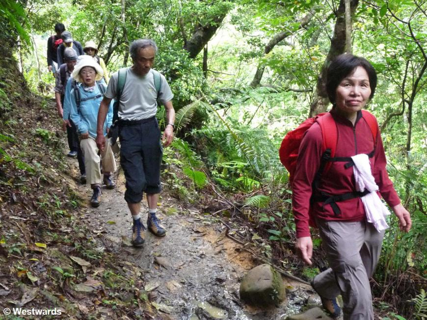 Japanese hikers on a jungle path