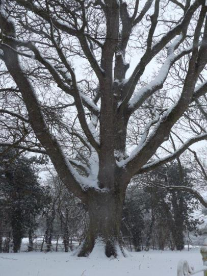 tree in snow_2