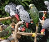 Keukenhof feathered birds