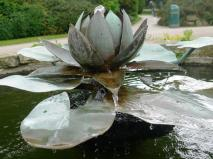 010 Water Lily running water